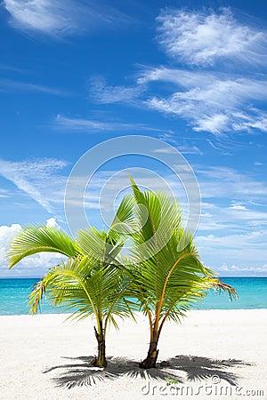 在天堂海岛上的棕榈树