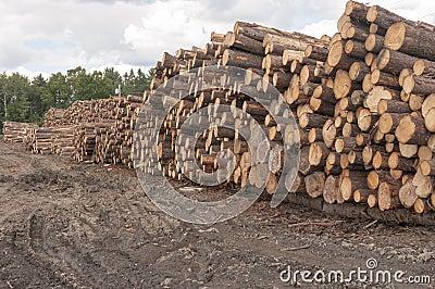 Κούτσουρα στο μύλο ξυλείας