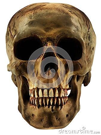 людской череп