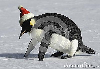 圣诞节适应