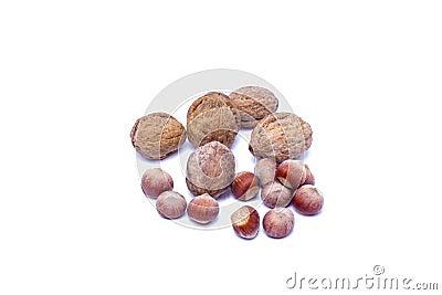 Ξύλο καρυδιάς φουντουκιών