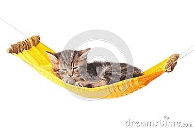 Уснувший котенок