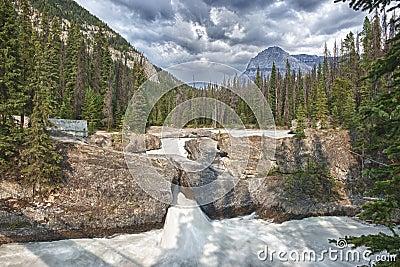 鲜绿色湖自然桥梁