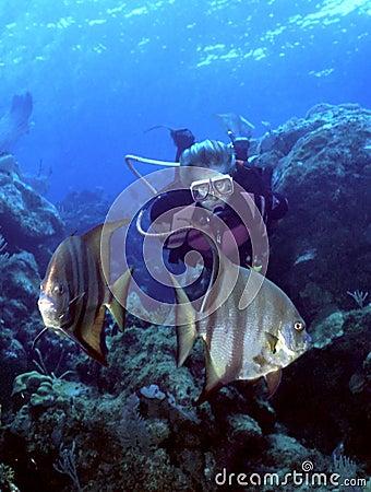潜水员细麟白鲳妇女