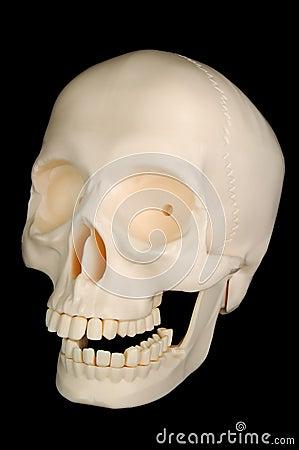 смешной череп