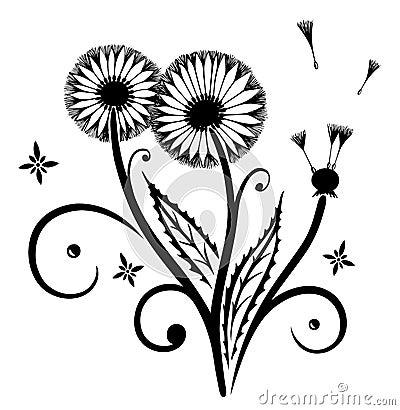蒲公英,花