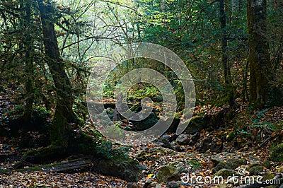 Пугающий лес хеллоуина с упаденным деревом