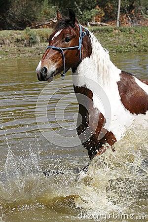 Лошадь брызгая в запруде