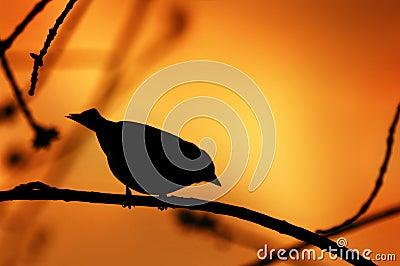 在分支的鸟剪影