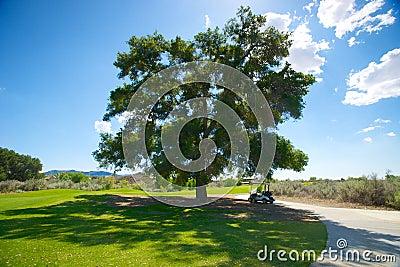 高尔夫车在树荫下