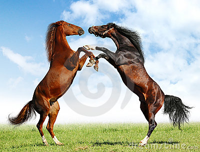 лошади дракой
