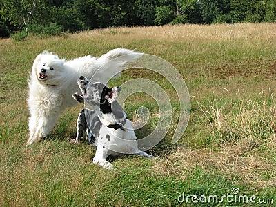 παιχνίδι σκυλιών