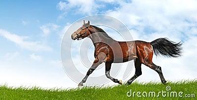 лошадь идет рысью