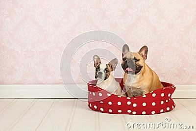 Собаки в корзине