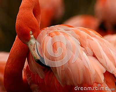 桃红色俏丽