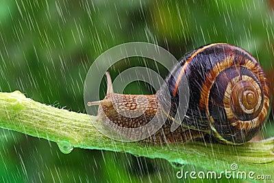 爬行在有雨和蜗牛植物的单项的背景.蚂蚁花呗怎么绿色还款图片