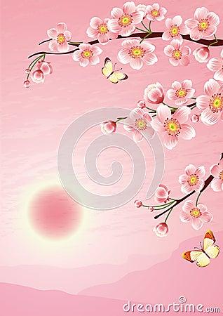 вишня цветения