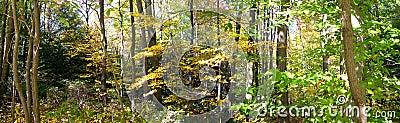 древесины