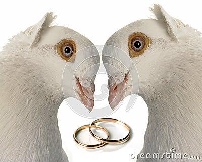 γάμος περιστεριών