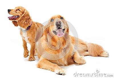щенок собаки