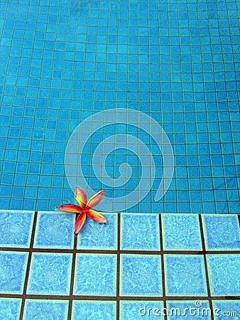 蓝色热带花池红色手段的游泳
