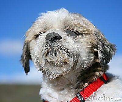 流口水的狗图片
