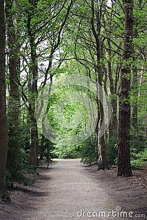 οδικά δάση