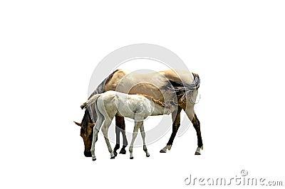 изолированные лошади