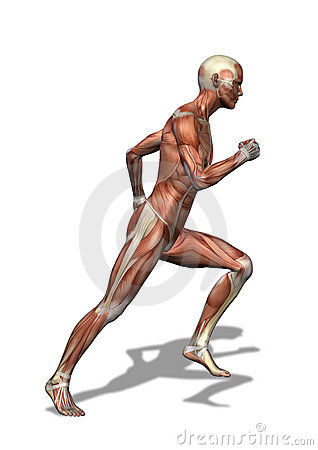 男性肌组织运行中 库存图片 - 图片: 5035001