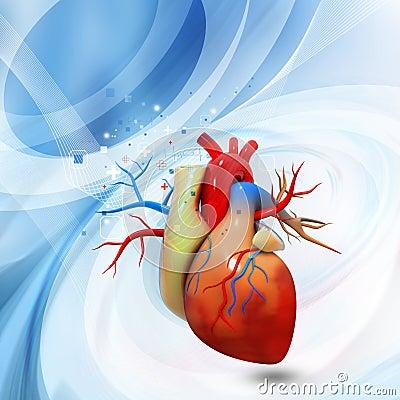 人的心脏的数字式例证.图片
