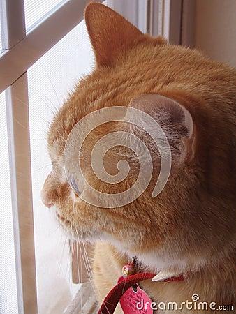 παράθυρο γατών