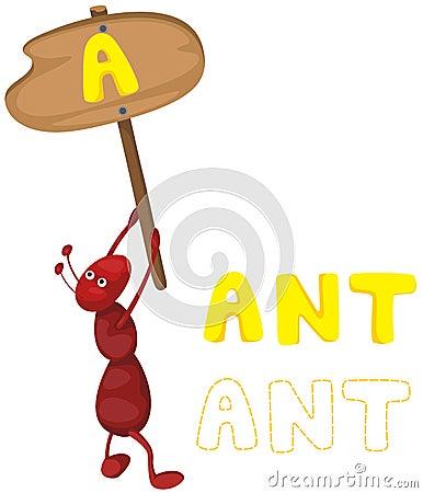 与蜘蛛的蚂蚁字母表a动物里大型房间特别多图片