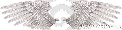 белые крыла