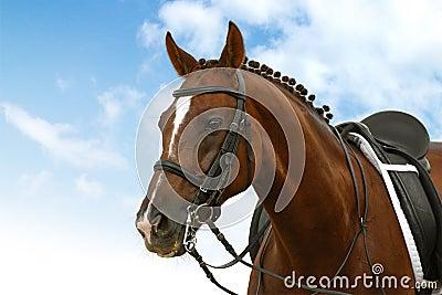 εκπαίδευση αλόγου σε περιστροφές