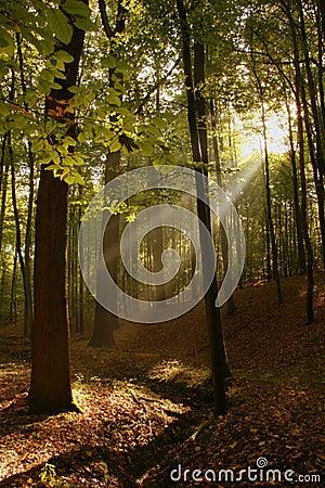 光芒星期日森林