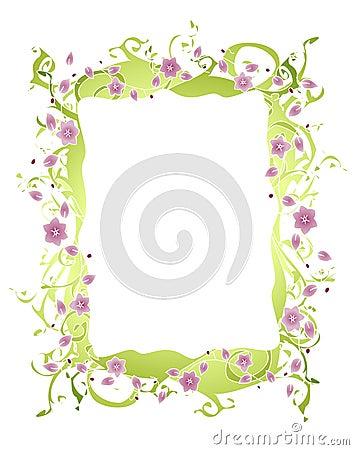 边界花紫色藤