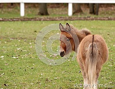 миниатюра лошади