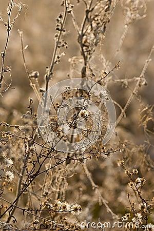 动物区系开花通配