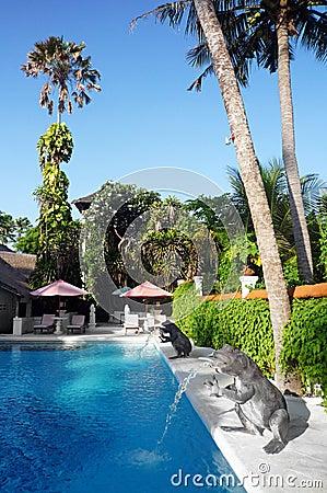 巴厘岛旅馆池热带手段的游泳