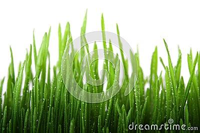 трава влажная