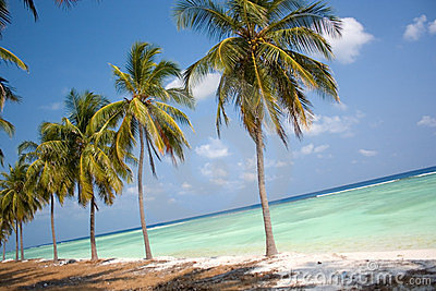 Рай острова - пальмы