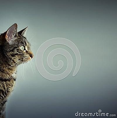 διάστημα αντιγράφων γατών