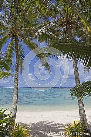 海滩对热带的棕榈树