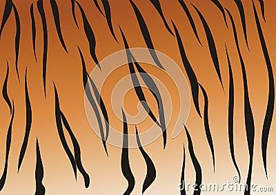 вены тигра