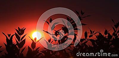 叶子剪影日落