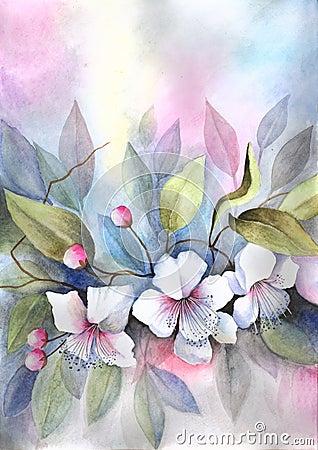开花的樱桃树