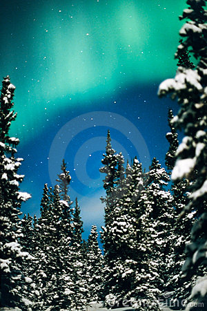 Nordlig lampa-, norrsken- och vinterskog