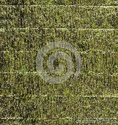 Free Nori Edible Seaweed Sheet Stock Images - 37701574