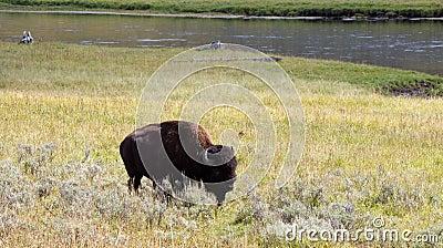 buffalo prairie singles Buffalo prairie knives, burlington, wisconsin 2k likes custom knives and leather gear, leather holsters, hiking staffs.