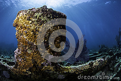 North American Coral Reefs